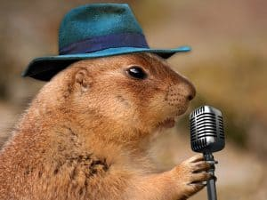 Public Address Announcer Hamster